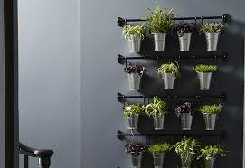 plante cuisine plantes aromatiques pour cuisine photos de design d intérieur et
