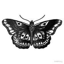 harry styles butterfly metal prints by niallsruby redbubble