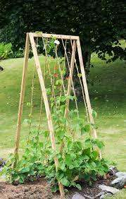 build folding a shaped bean frame instructions allotment u0026 gardens