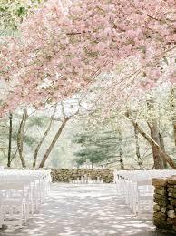 Cherry Blossom Tree Centerpiece by Best 25 Cherry Blossom Wedding Ideas On Pinterest Cherry