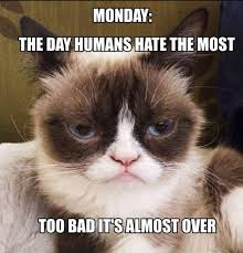 Unamused Cat Meme - 442 best grumpy cat images on pinterest funny stuff ha ha and cats