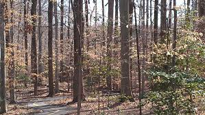 Maryland forest images Collaboration and nepa and the power to decide who still has the jpg