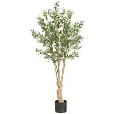 5 foot olive tree potted 5258