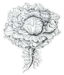 pen u0026 ink reproduction botanical art u0026 natural science