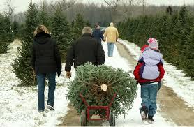 you cut christmas trees jackson griffin georgia