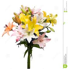 bouquet of lilies lilies bouquet stock image image of pink pictures botanical