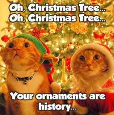 Merry Christmas Cat Meme - 18 funny animal pics for your wednesday ornament funny animal