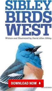 best 25 sibley guide to birds ideas on pinterest hummingbirds