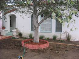 frugal drought tolerant landscaping angela barton