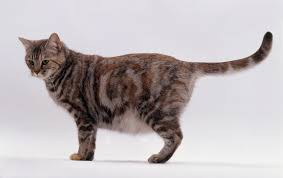 cat 101 all about cats reproduction