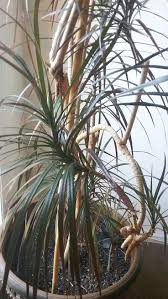 homelife 10 best plants for vertical gardens 34 best houseplants images on pinterest houseplants plants and