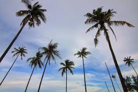 palm trees blue sky free stock photo negativespace