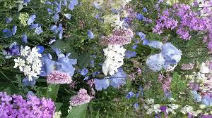 the smart garden chelsea photos 2016 gardening forum gardenersworld com