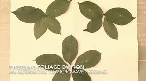 Foliage Flower - how to press leaves flowers herbs by iron drying pressing