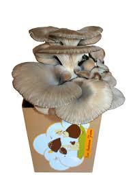 amazon com back to the roots organic mushroom farm amazon launchpad