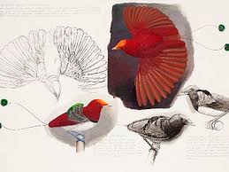 An image of a drawing of two small red birds in profile. Elizabeth Butterworth, King Bird of Paradise© Elizabeth Butterworth, courtesy Jerwood Visual Arts - v0_master