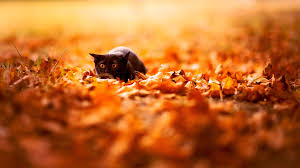 black cat halloween wallpaper cute autumn free desktop wallpaper wallpapersafari