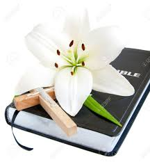 easter lily stock photos u0026 pictures royalty free easter lily