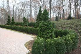 Backyard Landscaping Cost Estimate Front Yard And Backyard Formal Natural Or Contemporary