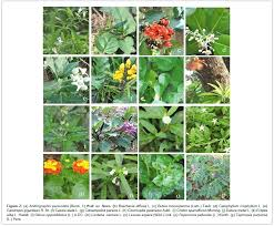 native american healing plants folk knowledge on medicinal plants used for the treatment of skin