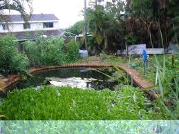 vanessa u0027s garden 009 jpg 1296743189