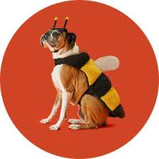 Extra Large Dog Halloween Costumes Pet Halloween Costumes Target