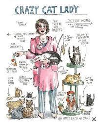 Cat Lady Meme - the crazy cat lady defined http sulia com channel cats f 5ca64e1e