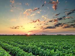 Mississippi landscapes images Sunsets landscapes and iphoneography flat out delta jpg