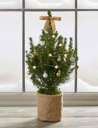 postal mini tree m s