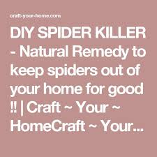 I Tried Killing A Spider - best 25 spider killer ideas on pinterest clean washer grout