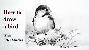 how to draw a realistic chickadee plus shading tips chickadee by