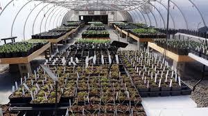 Clemson Botanical Garden by South Carolina Botanical Garden Spring Plant Sale Begins April 10