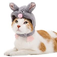 pick the right halloween costume for your cat or dog today com
