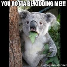 You Gotta Be Kidding Me Meme - you gotta be kidding me koala can t believe it meme generator