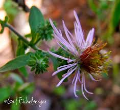 clay and limestone wildflower wednesday a different kind of
