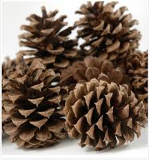 Pinecone How To Make Bird Feeders With Peanut Butter And Pine Cones My