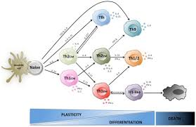 frontiers plasticity of human cd4 t cell subsets immunology