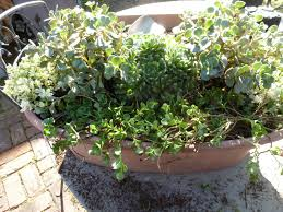 jarvis house creating a container garden with mini plants