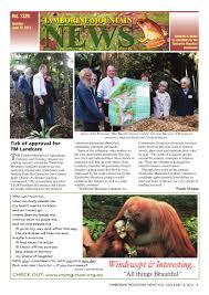 bentley orangutan tamborine mtn news by tamborine mountain news issuu