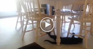 Cat Under Chair They Saw Their Cat Under The Table So They Took A Closer Look U2026 I