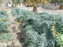 home and garden u2013 las vegas review journal