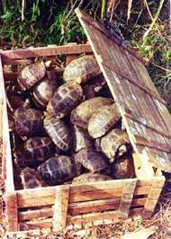 petco black friday petco black friday 50 off all reptiles that means tortoises