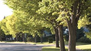 How Much Light Does Your by How Much Does Your Tree Save You U2022 Arbor Day Blog