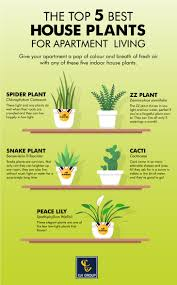 Best Indoor Plants Low Light by Top 5 Best Houseplants For Apartment Living Infographic Clv