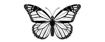 how to draw a butterfly by