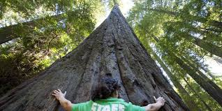 places to see big trees visit california