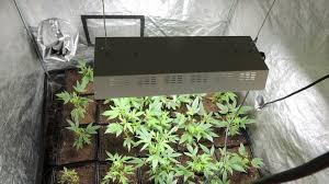 chambre de sechage cannabis une production de cannabis dans un appartement de nazaire
