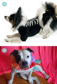 Dog Halloween Costumes Adults Roundup 14 Halloween Costume Ideas Totally Awesome