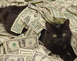 Rich Cat Meme - that s money in the kitty world s wealthiest cats pose among cash