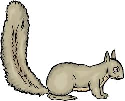 images of squirrel free download clip art free clip art on